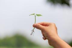 Remettez la capture, en tenant une pousse ou une jeune plante Photo stock
