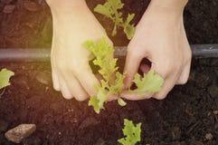 Remettez la plantation dans la ferme, le concept comme amour et le monde d'économies Images stock