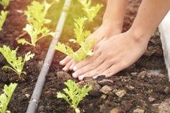 Remettez la plantation dans la ferme, le concept comme amour et le monde d'économies Photo libre de droits