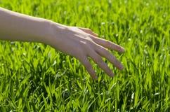 Remettez le champ d'herbe Photographie stock