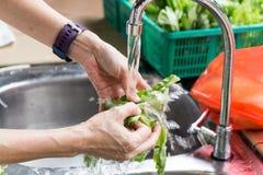 Remettez le légume feuillu de lavage avec l'eau courante dans le péché de ménage photographie stock