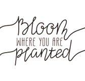 Remettez le lettrage écrit - fleurissez où vous êtes planté Décor à la maison d'illustration de vecteur, moderne et élégant éléga Image libre de droits