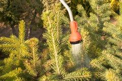 Remettez le tuyau d'arrosage avec un pulvérisateur de l'eau, arrosant les usines coniféres dans la pépinière Images stock