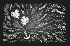 Remettez les lauriers esquissés d'éléments de vintage de vecteur, feuilles, fleurs illustration stock