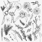 Remettez les lauriers esquissés d'éléments de vintage, feuilles, fleurs Sauvage et libre illustration libre de droits