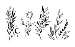 Remettez les lauriers esquissés d'éléments de vintage de vecteur, feuilles, fleurs illustration de vecteur