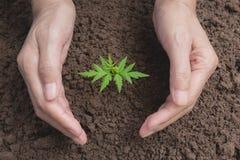 Remettez protéger une jeune usine verte avec s'élever dans le sol dessus Photo stock