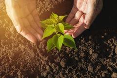 Remettez protéger une jeune usine verte avec s'élever dans le sol dessus Images stock