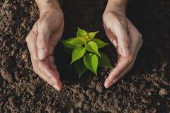 Remettez protéger une jeune usine verte avec s'élever dans le sol dessus Photos stock