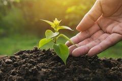 Remettez protéger une jeune usine verte avec s'élever dans le sol dessus Photographie stock libre de droits