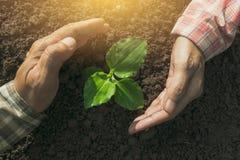 Remettez protéger une jeune usine verte avec s'élever dans le sol dessus Photos libres de droits