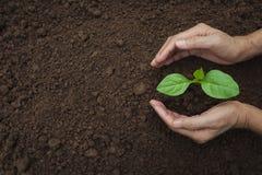 Remettez protéger une jeune usine verte avec s'élever dans le sol dessus Image stock