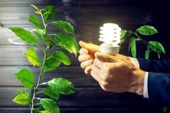 Remettez tenir l'ampoule à côté de l'arbre vert Photographie stock