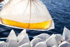 Remettez tenir la crevette larvaire dans un sachet en plastique photographie stock libre de droits