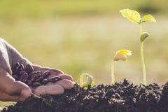 Remettez tenir la graine et la croissance de la jeune plante verte Image libre de droits