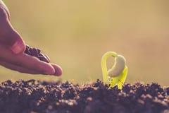 Remettez tenir la graine et la croissance de la jeune plante verte Images stock