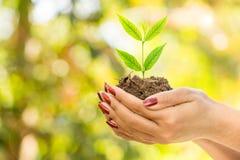 Remettez tenir la plante verte s'élevant sur le sol au-dessus de la nature, fond d'écologie Photographie stock