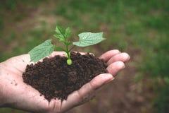 Remettez tenir le sol fertile pour l'usine à l'élevage dans le concept de nature Images libres de droits