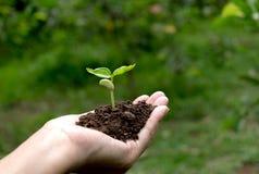 Remettez tenir le sol fertile pour l'usine à l'élevage dans le concept de nature Photos stock
