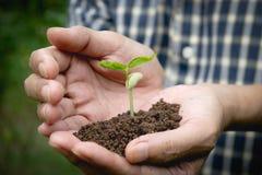 Remettez tenir le sol fertile pour l'usine à l'élevage dans le concept de nature Photographie stock