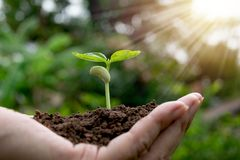 Remettez tenir le sol fertile pour l'usine à l'élevage dans le concept de nature Photos libres de droits
