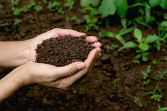 Remettez tenir le sol fertile pour l'usine à l'élevage dans le concept de nature Image stock