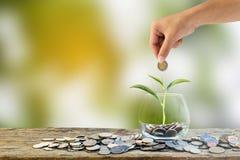 Remettez tenir mettre la pièce de monnaie dans le verre clair avec l'élevage d'arbre Images libres de droits