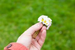 Remettez tenir un groupe de fleurs et d'oeil de boeuf de pissenlit Photographie stock