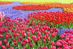 Remiendo colorido del jardín de los tulipanes Fotografía de archivo