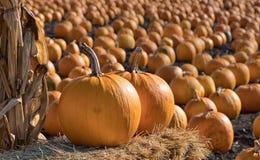 Remiendo de la calabaza de la acción de gracias de Halloween Fotografía de archivo