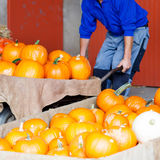 Remiendo de la calabaza con la porción de verduras para la acción de gracias Foto de archivo