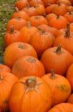 Remiendo de la calabaza en el otoño Imagen de archivo