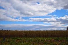 Remiendo de la calabaza y campo de maíz Imagen de archivo