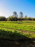 Remiendo vegetal en DOS Marinheiros, Rio Grande de Ilha Foto de archivo libre de regalías