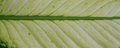 Remiendo verde del modelo de la fibra de la hoja fotos de archivo