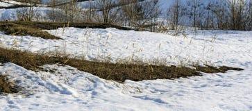 Remiendos del deshielo de la primavera con los arbustos y las espiguillas de la hierba seca del ` s del año pasado Foto de archivo