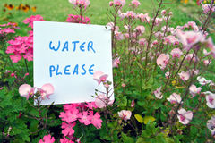 Reminder: watering the plants Royalty Free Stock Photography