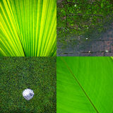 Remix green eco texture background Royalty Free Stock Photo