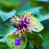 Remnant flower. This was a flowers and plants picture, the picture has reflected the remnant flower's scene Stock Image