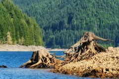 Remnants of trees along shoreline Royalty Free Stock Photos