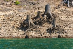 Remnants of trees along shoreline. Releasing the waters at Detroit Lake Dam reveals the remnants of trees that were removed along the lake shoreline Royalty Free Stock Image