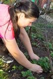Remoção de ervas daninhas da jovem mulher Fotografia de Stock Royalty Free