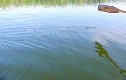 Remo de madera, descensos del agua y ondulaciones Foto de archivo libre de regalías