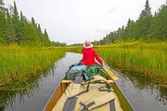 Remo em um lago gramíneo wilderness nas madeiras nortes fotos de stock