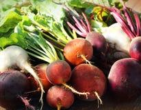 Remolachas coloridas de la granja fresca en un fondo de madera Detox y salud Foco selectivo Remolacha roja, de oro, blanca Foto de archivo libre de regalías
