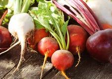 Remolachas coloridas de la granja fresca en un fondo de madera Detox y salud Foco selectivo Remolacha roja, de oro, blanca Fotos de archivo libres de regalías