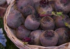 Remolachas frescas de la granja en una cesta Foto de archivo libre de regalías