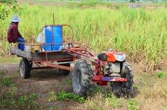 Remolque del tractor y del remolque en el campo de la caña de azúcar Fotografía de archivo