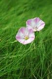 Remolque poca flor en hierba Foto de archivo libre de regalías