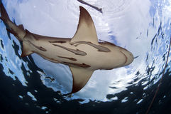 Remora Taxi Service Royalty Free Stock Photography